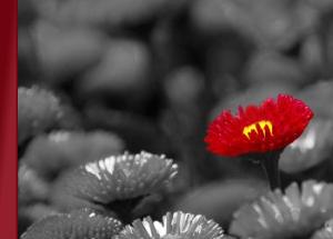 approach-flowers